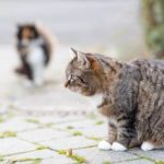 Will spaying or neutering reduce your cat's aggression?