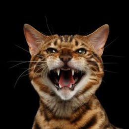 9 tips for handling an aggressive cat