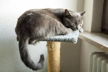 Calm cat napping on a cat tree