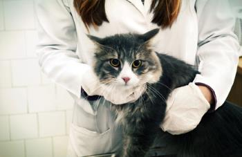 veterinarian gently restraining a fearful cat
