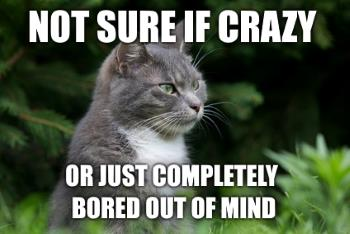 crazy cat thinking about being crazy meme
