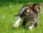 6 reasons not to punish your cat for aggression