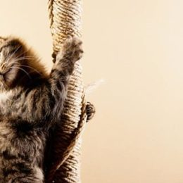 hyperactive cat climbing a rope