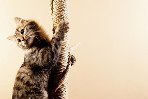 hyperactive cat climbing a rope
