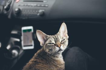 cat inside a car