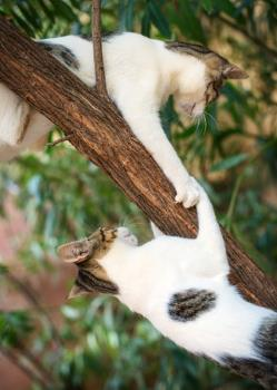 two cats fighting for dominance on a tree