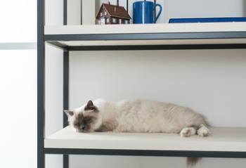 cat napping on an empty shelf