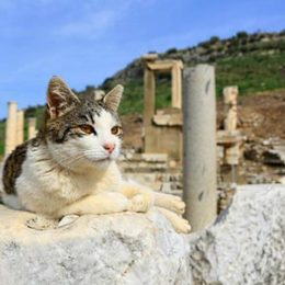 When and why were cats domesticated