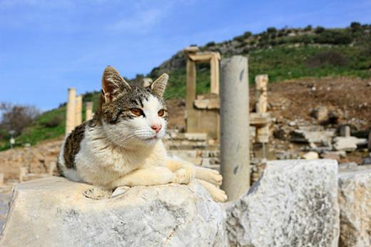domestic cat on an ancient background