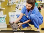 Six reasons to take a healthy cat on veterinarian visits