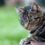 Seven tips for outdoor cat owners