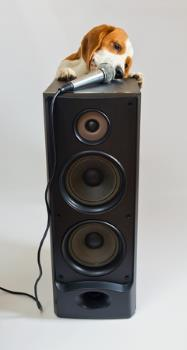 dog on an audio speaker with microphone