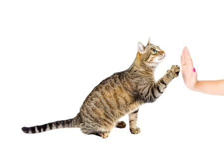 cat giving a high five