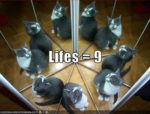 Why do cats have nine lives?