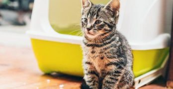 What if your cat has blood in its feces?