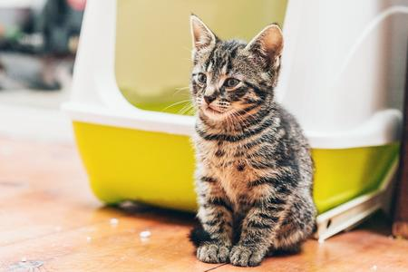 A worried kitten sitting in a front of litter box