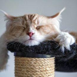 orange cat sleeping on a cat tree