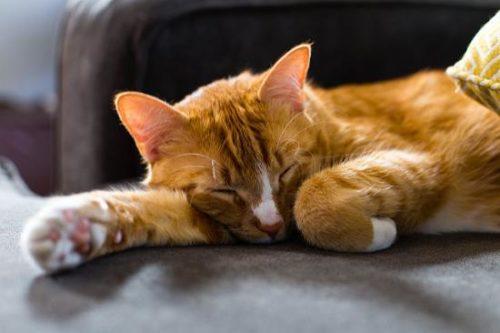an orange tabby cat sleeping