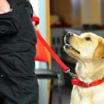 Five benefits of training your dog