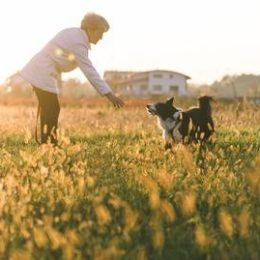 woman training her dog in a meadow