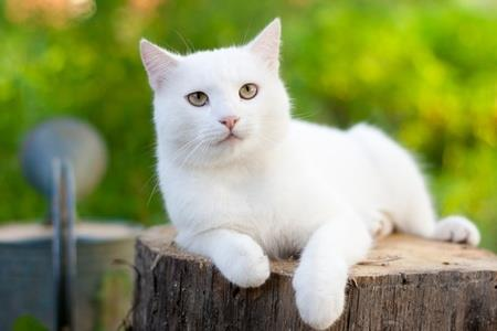 attnetive white cat lying on a stump