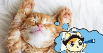 What do cats dream about when they sleep?