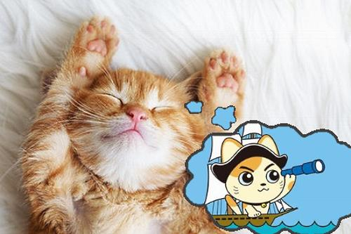 Orange tabby cat dreaming about sailing
