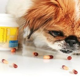 Why does placebo work on dogs and cats?