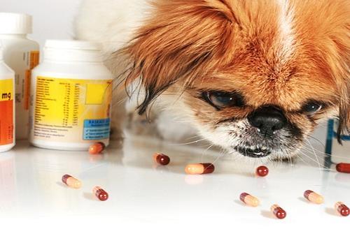 Dog literary eating placebo pills
