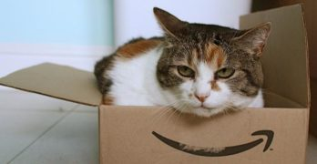Why do cats love boxes and tight places so much?