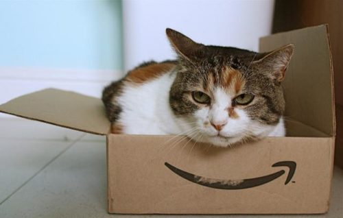 cat sitting in a small amazon cardboard box