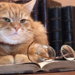 Old ginger cat lying on the desk with on old book near spectacles