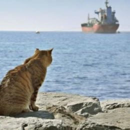 Old cat looking in a distance at a ship in a blue sea