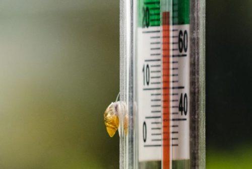 Aquarium thermometer temperature in fish aquarium