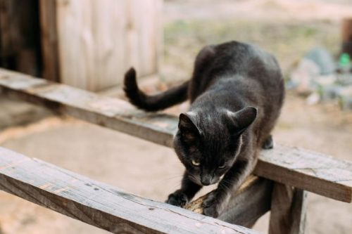 cat scratches a carcass of wooden furniture