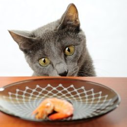 Hungry cat wants to eat all the time