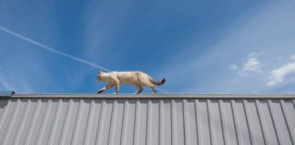 cat uses its tail for balance