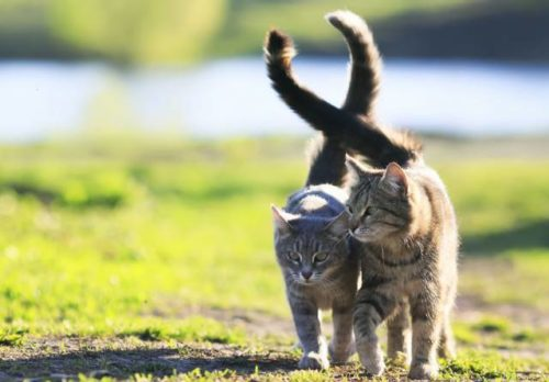 Cats communicating using their tails