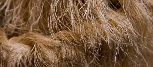 sisal rope on cat scratching post