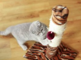 tall and sturdy cat scratching post