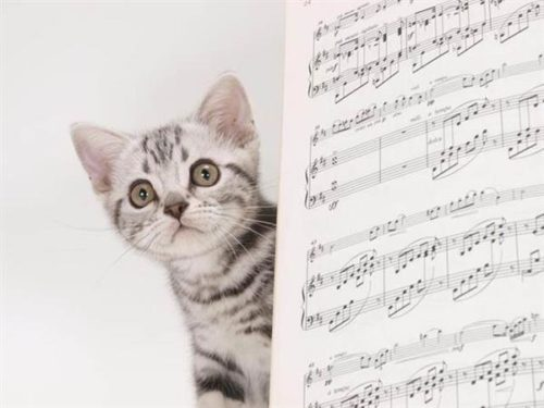 music improves your cats life