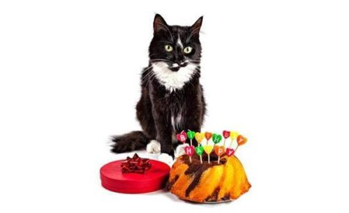 cat celebrates birthday