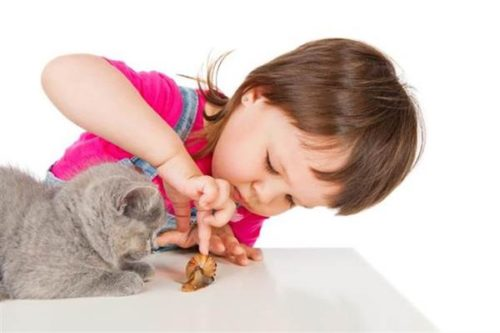 a child interacts with a cat
