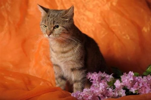 cat disgusted with flower scent