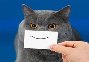 cat with a drawing of a smile