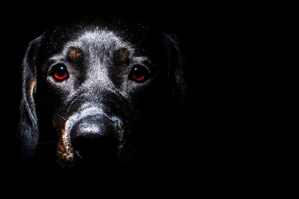 dog's eyes looking in the dark