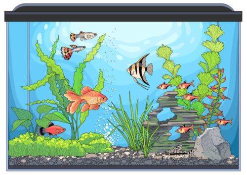 light up fish tank