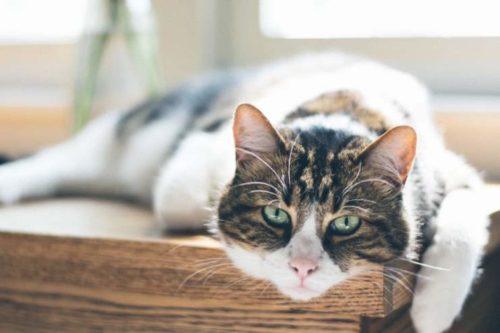 sedentary cat