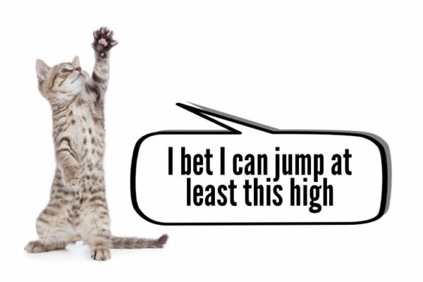 kitten arguing about how high can cats jumps - comic