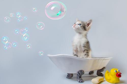 Kitten taking a bath